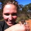 Western pygmy possum (Cercartetus concinnus)